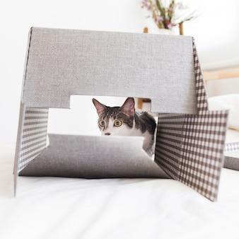 Funny cat behind box