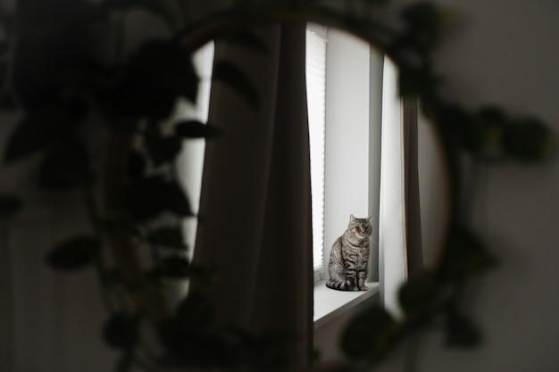 Funny cat in a cozy home interior