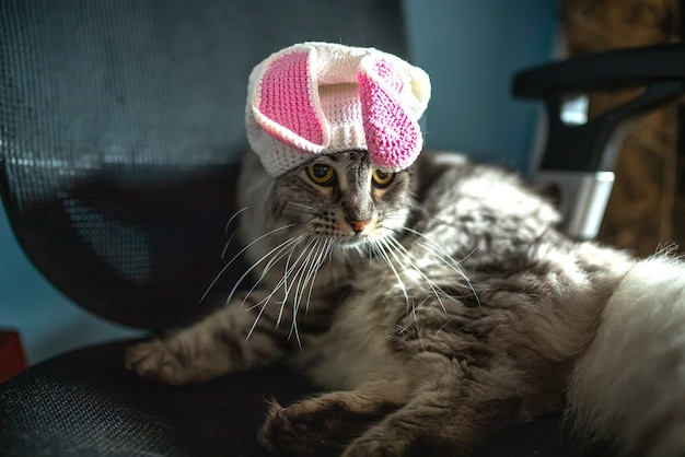 Funny cat in easter bunny hat sits on computer chair.