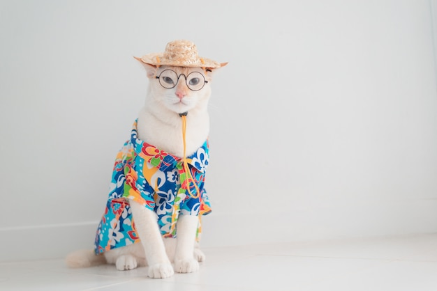 Funny cat going on vacation, wear beach shirt and hat in summer concept