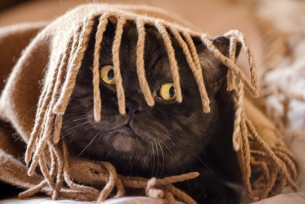 面白い猫は、縁にフリンジが付いたベージュのチェック柄の下に隠れます