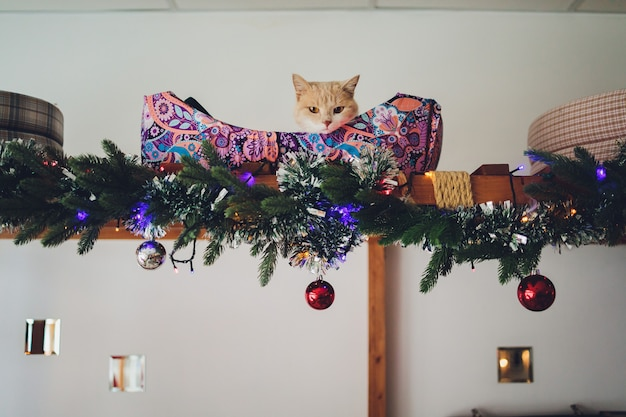 Funny cat at home sitting at home beautiful christmas background with a new year daccor, christmas tree with embellishments. christmas card with a christmas.