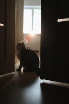 Забавный кот в уютном домашнем интерьере уютная домашняя атмосфера