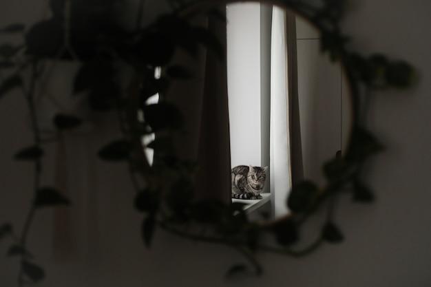 Забавный кот в уютном домашнем интерьере