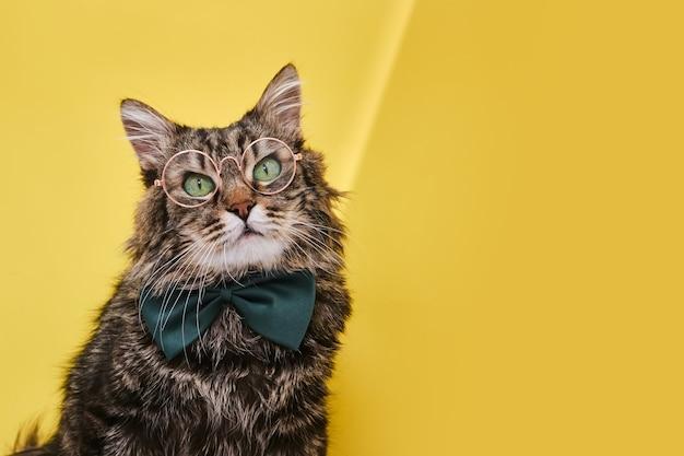 노란색 표면에 앉아 나비 넥타이에 웃 긴 고양이