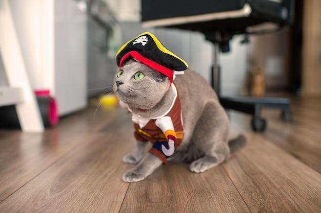 Забавный кот в маске.