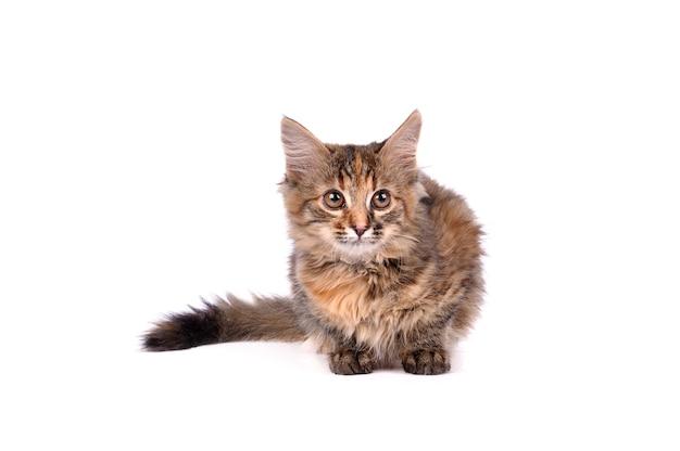 Забавный кот, изолированные на белом фоне