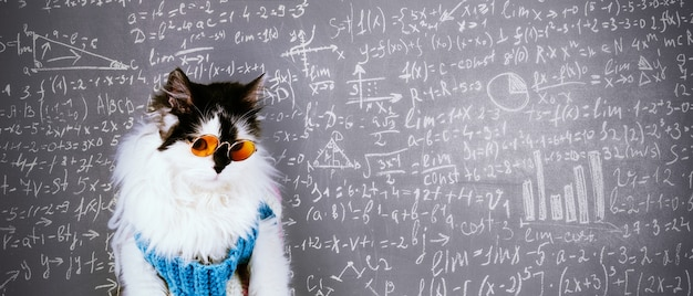Funny cat in knitted winter sweater and glasses over blackboard inscribed with scientific formulas