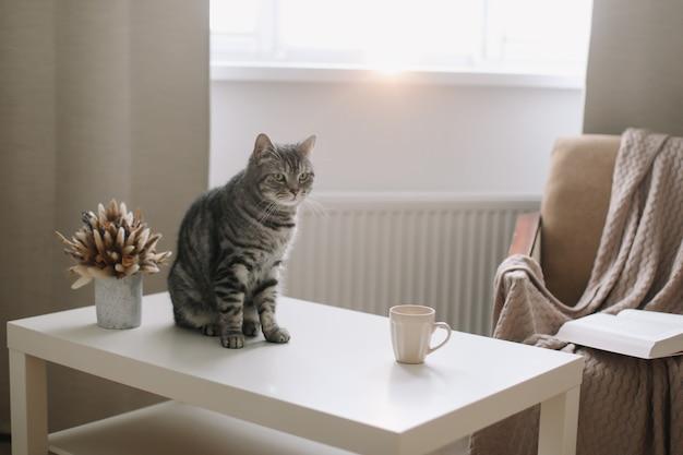 Забавный кот на фоне хюгге дома