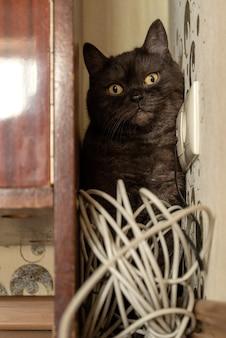 Забавный кот играет с рулоном кабеля