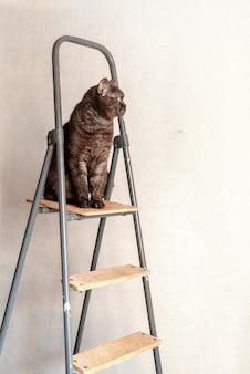 アパートの改修中、脚立の上に面白い猫が座っています