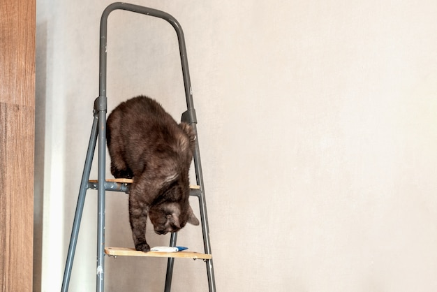 Funny cat sits on top of ladder and tries to reach the brush lying below on the step during the renovation of the apartment