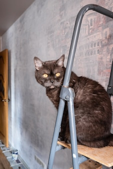 Funny cat sits on top of stepladder during the renovation of the apartment