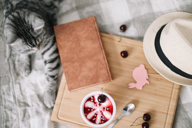 Funny cat sleeping on the blanket cozy summer flatlay of female blogger