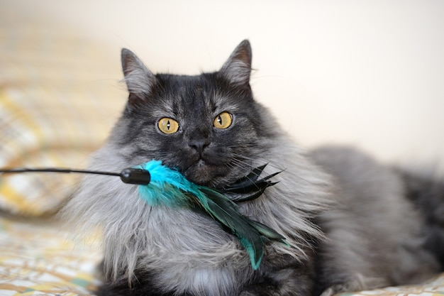Funny cat stroking with a feather