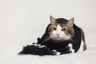 Funny cat wearing a warm scarf. Lying  on a blanket. Winter season concept