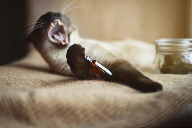 彼女の口を開いて、彼女の足の動物のためのcbdオイルドロッパーを持つ面白い猫。