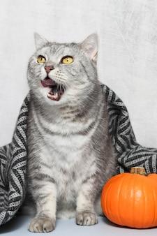 チェック柄で覆われた口と舌を開いた面白い猫