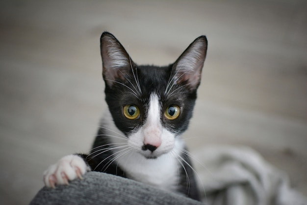 爪が付いているfunnyの黒いcatの足