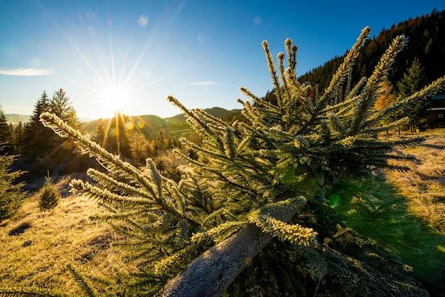 Забавная милая елочка, присыпанная пушистым белым снегом, на солнечном ярком лугу в необычных горах карпат.