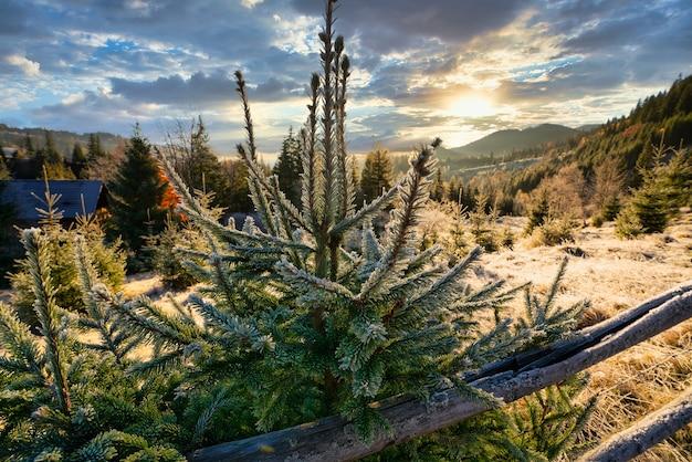 Carpathians의 특이한 산에서 햇볕이 잘 드는 밝은 초원에 푹신한 하얀 눈이 뿌려진 재미있는 귀여운 크리스마스 트리