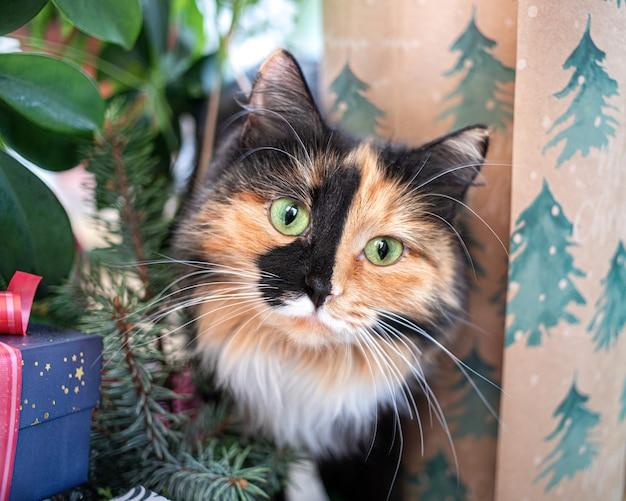 Забавная милая любопытная красочная голова кошки среди рождественских украшений крупным планом. подготовка к празднику с милой кошкой. забавный праздничный образ. любимые домашние животные.