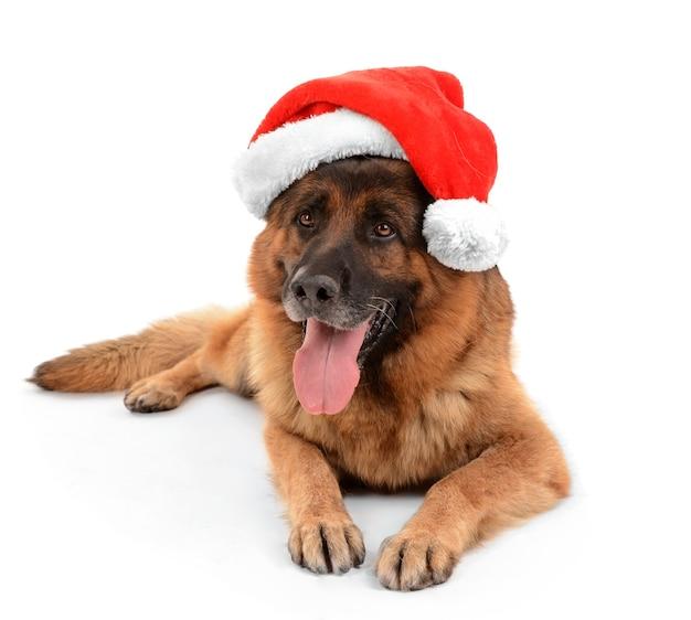 白で隔離のクリスマス帽子の面白いかわいい犬