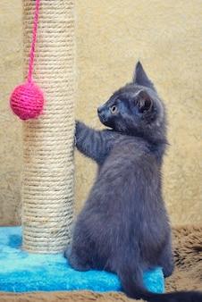 Забавный милый серый котенок играет с розовым мячом