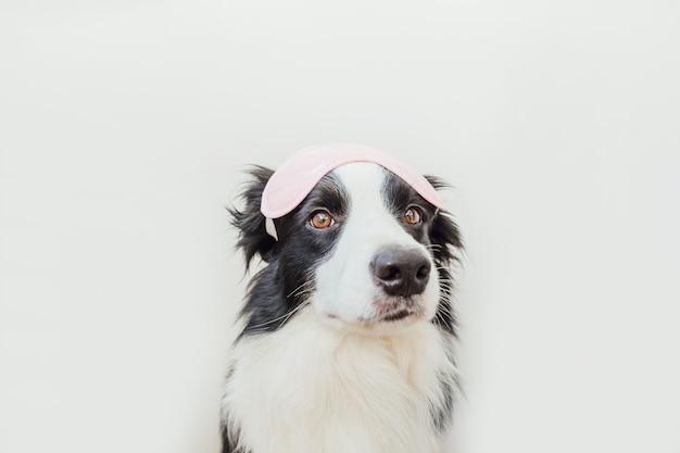 白い背景で隔離の眠っているアイマスクと面白いかわいい笑顔の子犬の犬のボーダーコリー