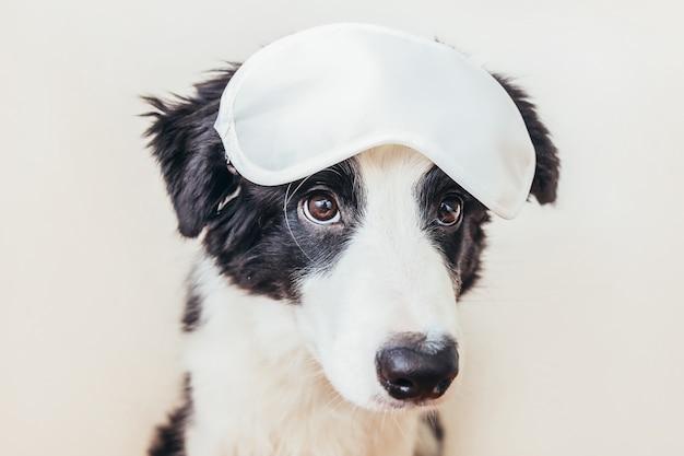 Забавный милый улыбающийся щенок бордер-колли со спящей маской для глаз, изолированной на белом