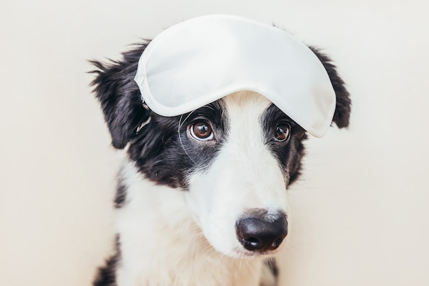 Funny cute smiling puppy dog border collie with sleeping eye mask isolated on white