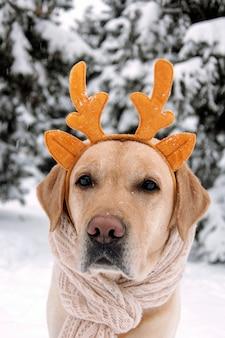 Забавная собака с рогами на зимнем фоне.