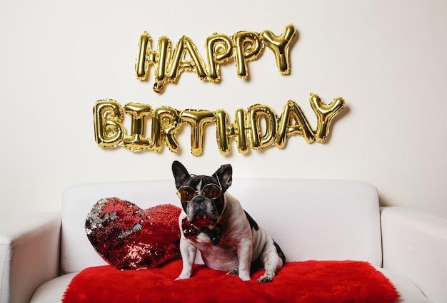 집에서 소파에 그의 생일 파티를 축하하는 재미 있은 개