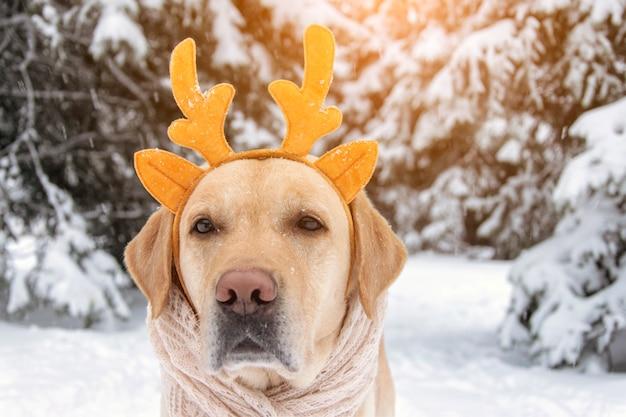 Funny dog in deer horns on a winter background. noel dog.