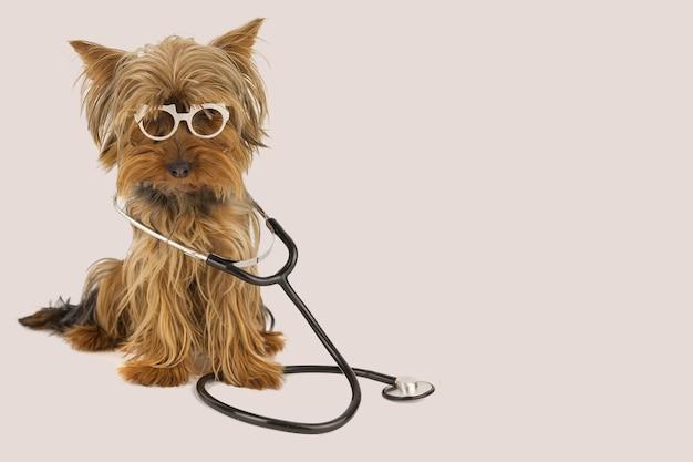 Забавная собака-врач в очках и стетоскопе