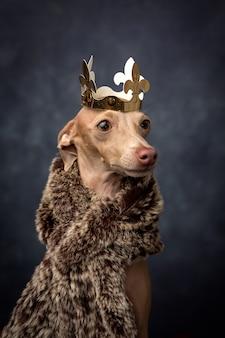Смешная собака, одетая как король-волшебник. рождество