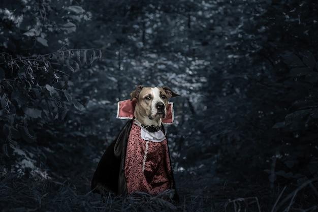 Забавная собака, одетая на хэллоуин как вампир дракула в темном залитом луной лесу. симпатичный серьезный щенок стаффордширского терьера в костюме страшного вампира в лесу, снятый в сдержанном ключе