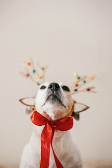 鹿の角の衣装を着た面白い犬、パーティーの準備と仮面舞踏会。メリークリスマスのお祝いのコンセプト