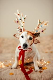 枝角のある鹿の衣装を着た面白い犬、パーティーの準備、仮面舞踏会