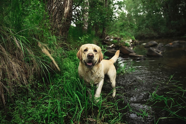 緑の森の川で面白い犬