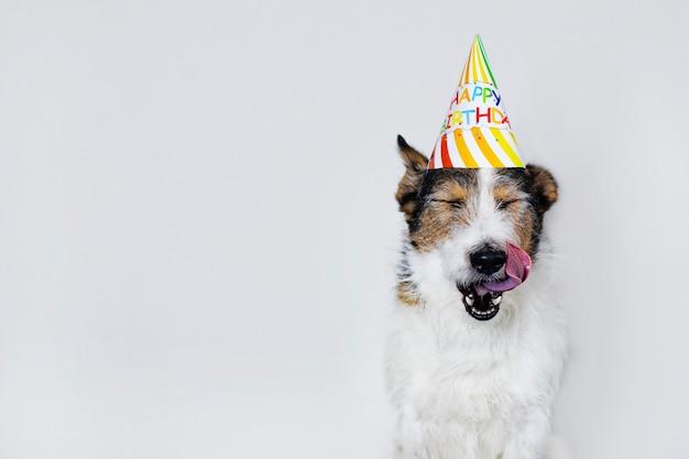 Смешная собака на белом фоне в кепке, с днем рождения. домашнее животное облизывает губы на празднике. копировать пространство