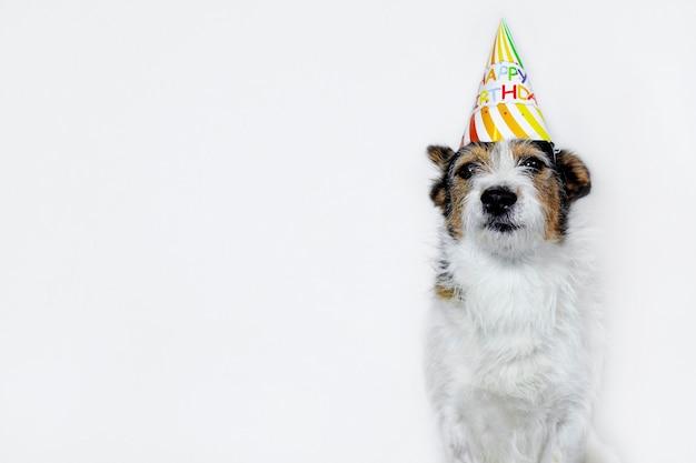 帽子、お誕生日おめでとう白い背景の上の面白い犬。パーティーでペット。コピースペース