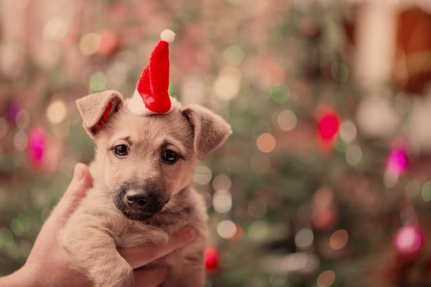 Смешная собака на фоне елки