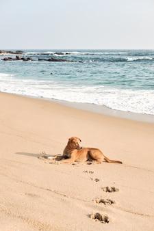 Funny dog rest on ocean beach sand, summer chill