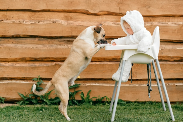 Funny dog standing with front paws on high chair with little baby in bear costume sitting there.