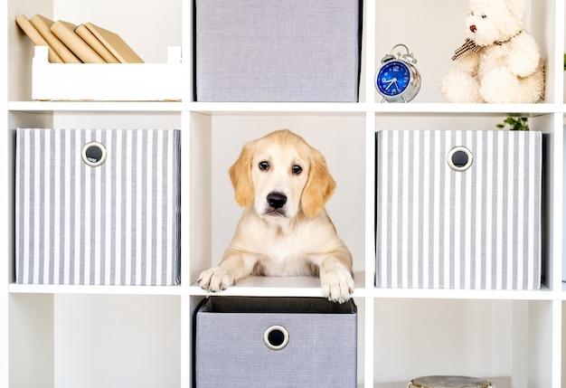 棚に囲まれた面白い犬