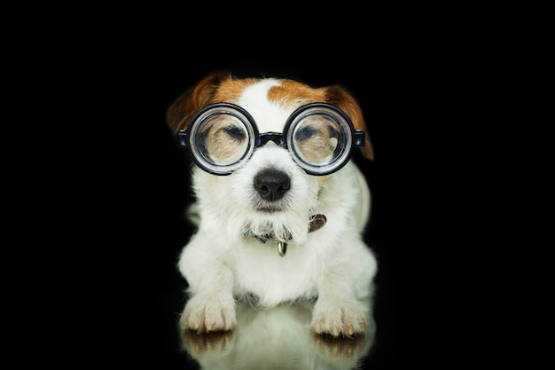 Funny dog wearing nerd geek glasses