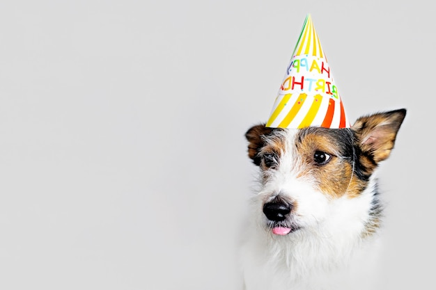 Funny dog on a white background in a cap, happy birthday. a pet licks its lips, celebrating a holiday. copy space