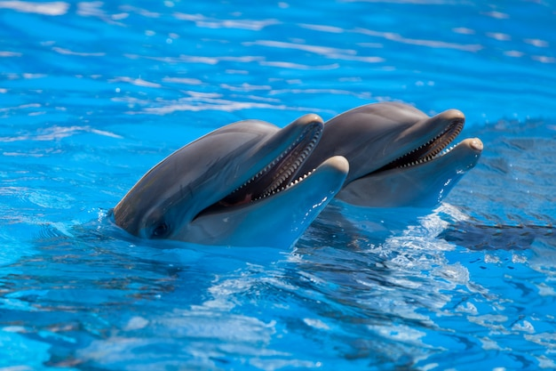 Смешные дельфины в бассейне во время шоу в зоопарке