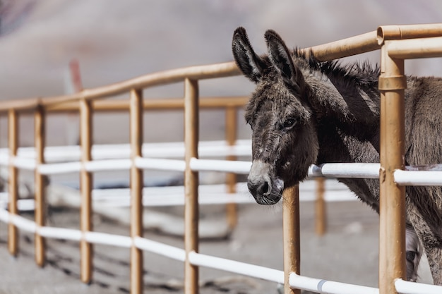 Funny donkey in enclosure